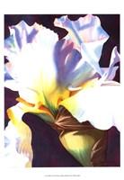 Blue Iris I Fine Art Print