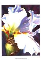 Blue Iris II Fine Art Print