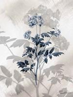 Indigo Bloom II Framed Print