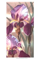 Asian Iris I Fine Art Print
