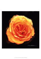 "Vibrant Flower II by Lola Henry - 13"" x 19"""