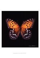 Techno Butterfly IV Fine Art Print