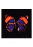 """Techno Butterfly III by Lola Henry - 13"""" x 19"""""""
