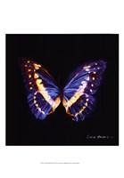 """Techno Butterfly II by Lola Henry - 13"""" x 19"""""""