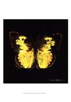 """Techno Butterfly I by Lola Henry - 13"""" x 19"""""""