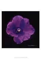 "Vibrant Flower VIII by Lola Henry - 13"" x 19"""