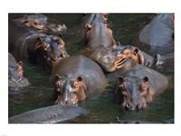 Hippo Pod Fine Art Print