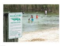 Alligators warning sign at the lakeside, Florida, USA - various sizes - $29.99