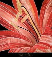 Red Amaryllis Fine Art Print