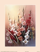 Gladiola Fine Art Print