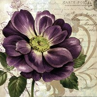 Study in Purple I-mini Fine Art Print