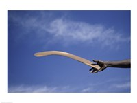 Throwing Non- Return, Fighting Boomerang, Australia Fine Art Print