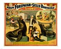 Circus Seals Fine Art Print