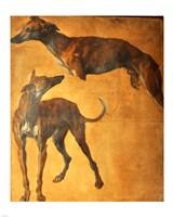 Study of Greyhounds Fine Art Print