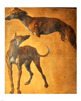 Study of Greyhounds Fine Art Print
