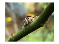 Small Spider Fine Art Print