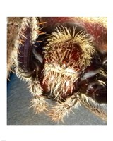 Spider Close Up Fine Art Print