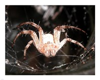 Spider In Web Fine Art Print
