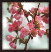 Quince Blossoms II Fine Art Print