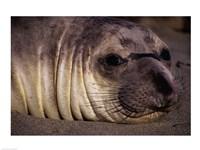 Seal - close - various sizes - $29.99