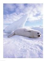 Seal - laying - various sizes - $29.99