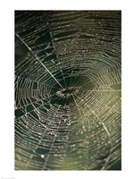 Close-up of a spider's web - various sizes