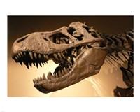 Palais de la Decouverte Tyrannosaurus Rex Fine Art Print