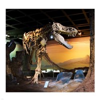 Tyrannosaurus Fossil Reproduction Fine Art Print