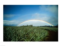 Makawao, Rainbow over farm, USA, Hawaii Fine Art Print