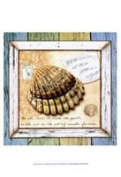 Sea Treasures V Framed Print