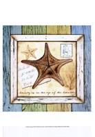 "Sea Treasures XII by Beth Anne Creative - 13"" x 19"""