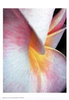 Flowers II Framed Print