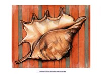 "Shell on Stripes II by Laura Nathan - 13"" x 10"""