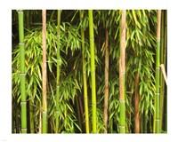 Bamboo Richelieu - various sizes