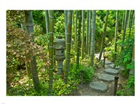 Hasedera-Bamboo Grove - various sizes