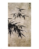 Xia Chang- Ink Bamboo Fine Art Print