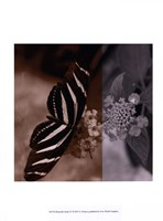 """Butterfly Study IV by A. Project - 10"""" x 13"""""""