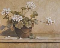 White Geranium Fine Art Print