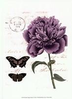 Small Vintage Floral IV Framed Print