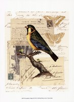"""Naturalist's Collage III by Vision Studio - 10"""" x 13"""""""