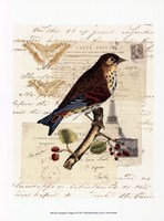 """Naturalist's Collage II by Vision Studio - 10"""" x 13"""""""