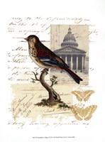 Naturalist's Collage I Framed Print