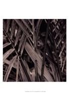 Bamboo Study II Framed Print