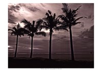 Palms At Night VI Fine Art Print
