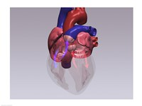 Close-up of a human heart with flow model Fine Art Print