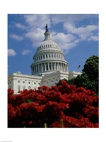 Flowering plants in front of the Capitol Building, Washington, D.C., USA Fine Art Print