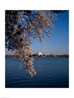 Jefferson Memorial Washington, D.C. USA Fine Art Print