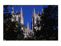 Trees in front of a cathedral, Washington National Cathedral, Washington DC, USA Fine Art Print