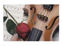 Violin - various sizes