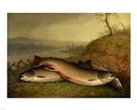 Brooklyn Museum - Trout - Walter M. Brackett Fine Art Print